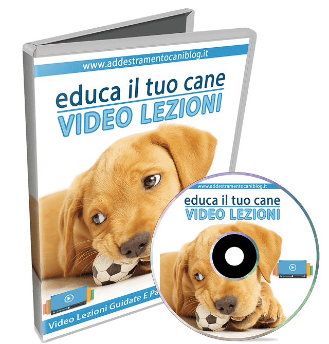 video corso cane